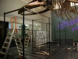 Vitrines zoologisch museum